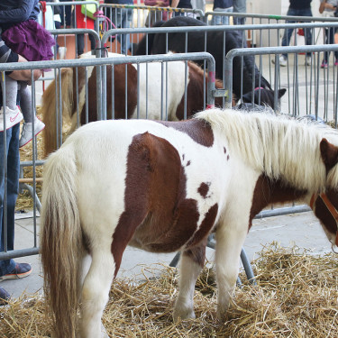 mni-pony